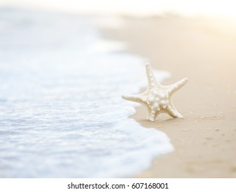 Starfish on the Beach in a Wave