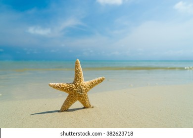 Starfish on the beach,Copy space for your text.