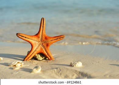 Starfish on a beautiful beach