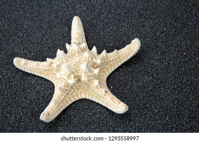 Starfish on black Beach Sand. Close up studio shoot