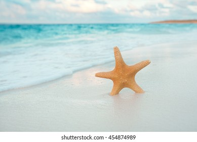 starfish on golden sand beach with waves in  soft sunset light, shallow dof