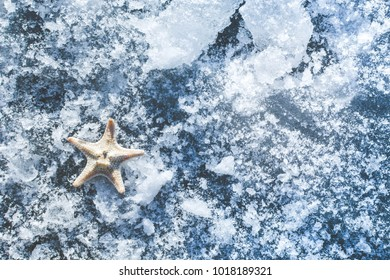 Starfish on an icy surface