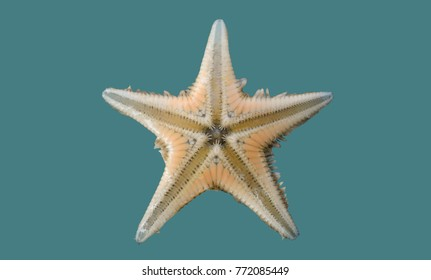 Starfish on isolated background.