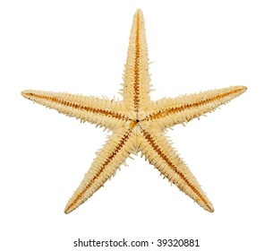 Starfish on isolated on a white background