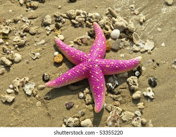 starfish on reef seacoast