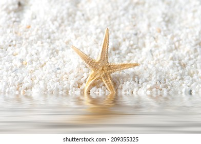 starfish on the sand