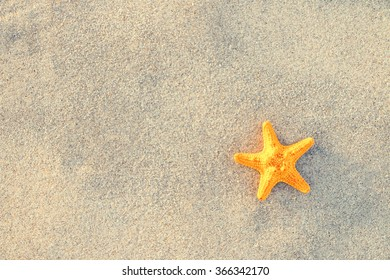Starfish on sand at beautiful beach.