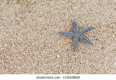 starfish on the sand, top view