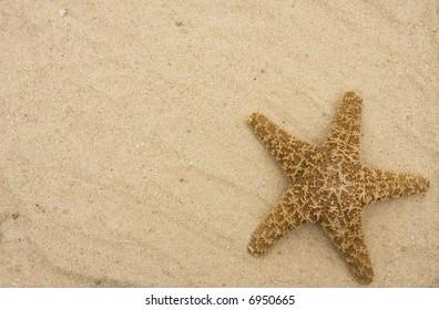 Starfish on sand - travel vacation background