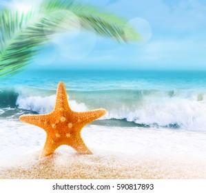 Starfish on a sandy beach near the sea. Summer beach.