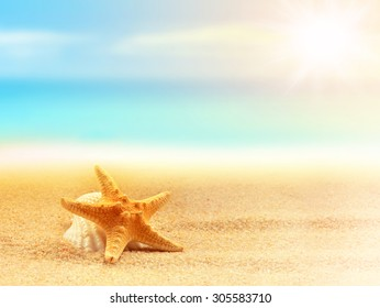 Starfish on the sandy beach. Summer time.