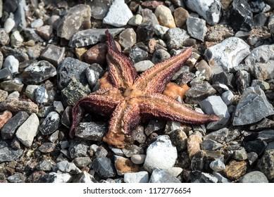 starfish on the stone background