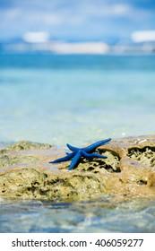 Starfish on tropical sand