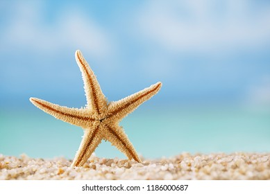 starfish  on white ocean beach with seascape background