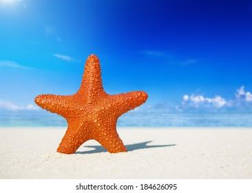 Starfish On a White Sand Beach