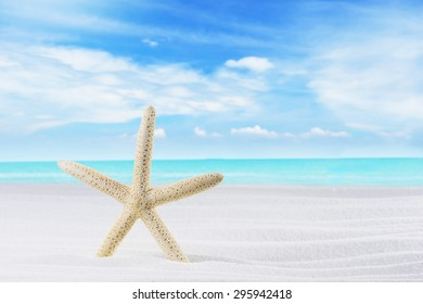 Starfish on White Sand Beach. Summer Concept