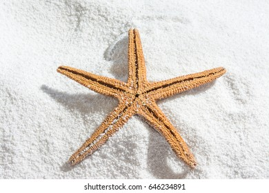 Starfish on white sand, for summer background with copy space