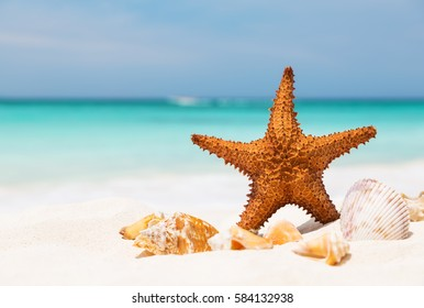 Starfish on the white sandy beach, Copy space for your text