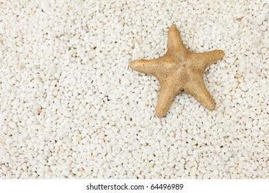 starfish on white stone background