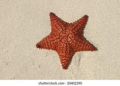 Starfish Orange starfish washed ashore