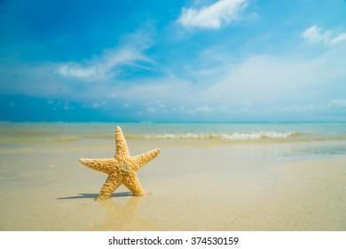 Starfish pon the tropical beach