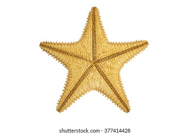 starfish reverse side isolated on white background