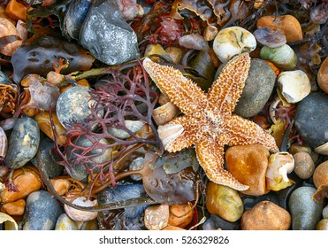 Starfish and rocks