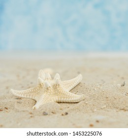 A starfish in the sand at the beach, square