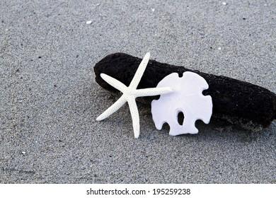 Starfish and Sand Dollar on drift wood