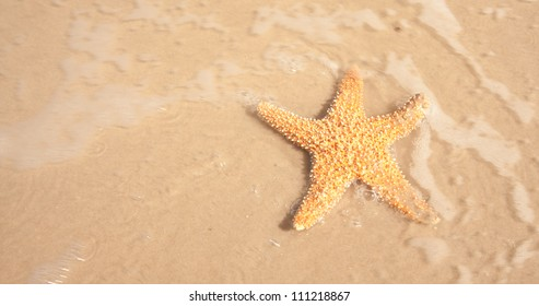 A starfish in the sand with the ocean water moving over it