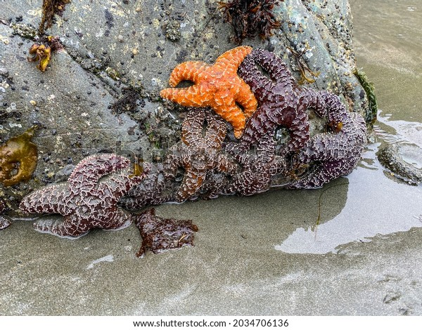 a starfish sea creatures grasping onto ocean rock formation with water reflections
