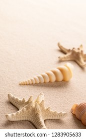 starfish and sea shell on white beach sand. backgorund with copy space.