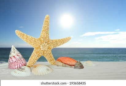 starfish with sea shells on the sea