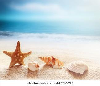 Starfish and sea shells on the beach and ocean as  background. Summer beach. Seashells.