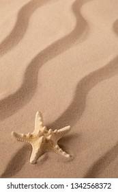 starfish or sea star laying in beach sand