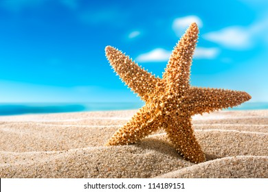 Starfish or sea star on the sandy beach. Holiday concept