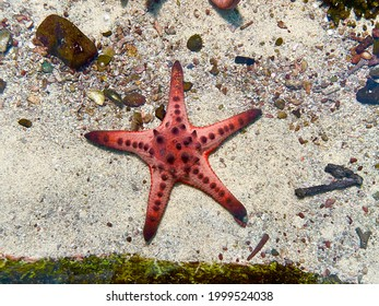 Starfish or sea stars are star-shaped echinoderms belonging to the class Asteroidea. Starfish are marine invertebrates and also known as Asteroids. Selective focus, top view - Shutterstock ID 1999524038