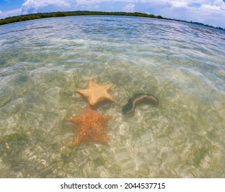 Starfish or sea stars are star-shaped echinoderms belonging to the class Asteroidea - Shutterstock ID 2044537715