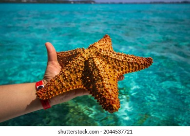 Starfish or sea stars are star-shaped echinoderms belonging to the class Asteroidea - Shutterstock ID 2044537721