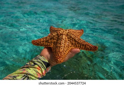 Starfish or sea stars are star-shaped echinoderms belonging to the class Asteroidea - Shutterstock ID 2044537724