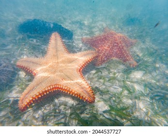 Starfish or sea stars are star-shaped echinoderms belonging to the class Asteroidea - Shutterstock ID 2044537727