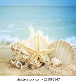 Starfish and seashell on the sandy beach