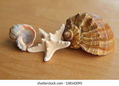Starfish and seashell on wooden background outdoors/Marine decor and spa design for relaxation