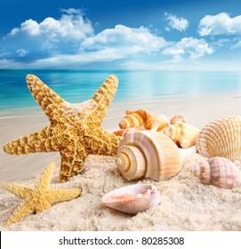 Stachelfische und Muscheln am Strand mit blauem Himmel