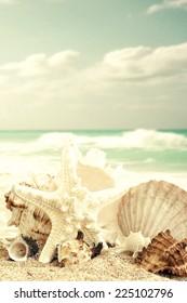 Starfish and seashells on sand beach