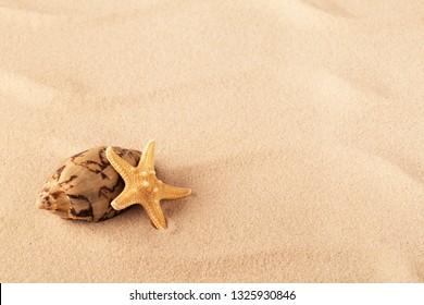 starfish and shellfish mollusk on sand tropical beach.
