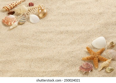 Starfish & Shells on Beach Sand