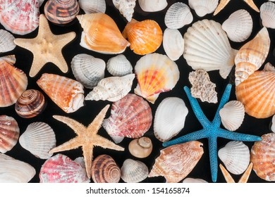 Starfish and shells on a black background