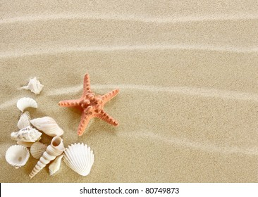 Starfish and shells on a sand beach