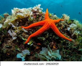 Starfish and sponge of the Mediterranean Sea.